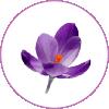 fleursdebach-01